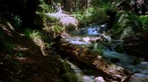 Time Lapse Of Creek And Forest At Big Sur