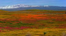 Panoramic View Of Antelope Valley California Poppy Reserve