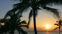 Time Lapse Of Sunrise Through Palm Trees, Hawaii