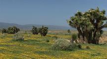 Spring Desert Stock Footage