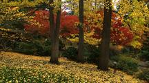 Bright Fall Colors In Park, Falling Leaves