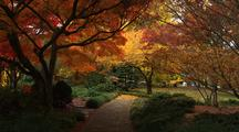 Bright Fall Colors In Park, Path