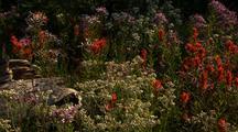 Wildflowers Next To Dead Log, Mt Rainier