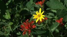 Wildflowers Balsamroot And Indian Paintbrush