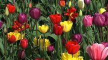 Blooming Flowers Stock Footage