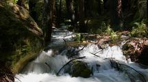 Time Lapse Creek Rapids Through Bg Sur Forest