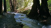 Time Lapse Creek Rapids Through Big Sur Forest