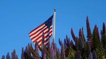 Purple Wildflowers And American Flag