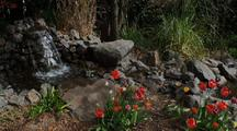 Pond Waterfall With Tulips