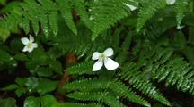Sword Ferns And White Flowers
