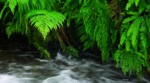Fast Moving Creek Below Ferns