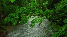 Fast Moving Creek, Rapids