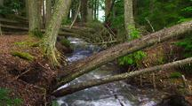 Fast Moving Creek In Forest