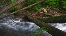 Trees Fallen Across Fast Moving Creek In Forest