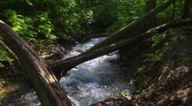 Trees Fallen Across Fast Moving Creek In Forest