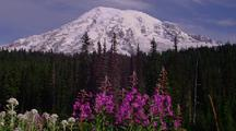 Wildflowers In Front Of Mt, Rainier