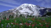 Mt Rainier Behind Field Of Wildflowers
