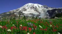 Wildflowers And Snow-Capped Mountain Background
