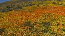 Walking Through California Poppy Reserve