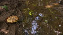 Box Turtle Upside Down On Muddy Bank Of Water.