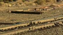 Birds Walking Feeding On Grain Along Railroad Tracks In The Nevada Desert.