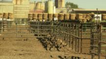 Birds Flying Around The Empty Corral Pens At A Stockyard Near Lovelock, Nevada. Bales Of Hay And Industrial Equipment Can Be Seen In The Background.