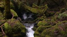 Lock-Off Shot Of Stream Running Through Montgomery Woods State Reserve, Over Mossy Rocks.