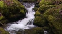River Running Through Montgomery Woods State Reserve, Over Mossy Rocks. Rapids.