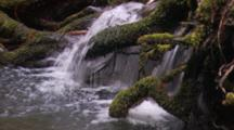 Small Waterfall Runs Over Mossy Branches In Montgomery Woods State Reserve.