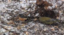 Greenfinch, Male, Female, Food, Brambling, Male