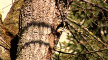 Nuthatch, Go Out Of The Nest,