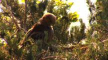 Short-Toed Eagle, Have A Wash,