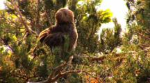 Short-Toed Eagle, Have A Wash,