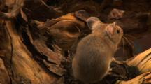 Field Mouse, Have A Dry Wash, Smell,