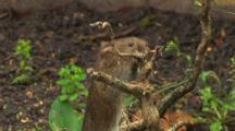 Vole, Smell, Climbing, Falling,