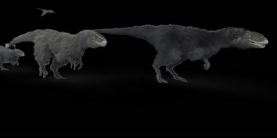Animation of Yutyranus (large predator Dinosaur) and flying Dinosaurs traveling through the frame