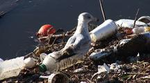 Sea Gulls Eat, Walk Among Trash Collected In Los Angeles River System