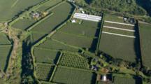 Aerial Over Te Puke Kiwifruit Fields, New Zealand