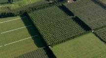 Aerial Zoom Over Te Puke Kiwifruit Fields, New Zealand