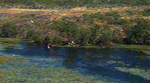 Sarus Cranes Fly Over Swamp, Marsh