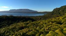 Aerial Over Forest Of Tree Ferns On Lake Shore