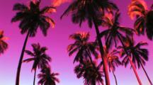 Palm Trees Against A Purple Toned Sky, On The Big Island Of Hawaii, Tilt