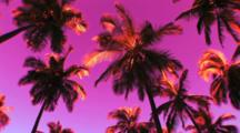 Palm Trees Against A Purple Toned Sky, On The Big Island Of Hawaii