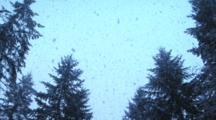 Snow Falling On Trees, S.E. Washington, Pan