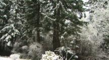 Snow In The Forest, Crane Shot