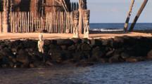 Ki'i (Carved Wooden Images) In Pu'uhonua O Honaunau National Historical Park, A Place Of Refuge, On The Big Island Of Hawaii