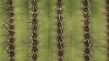 Close Up And Zoom In Shot Of Saguaro Cactus In Scottsdale, Arizona