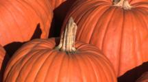 Pumpkins, Portland, Oregon, Zoom In