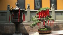 Chinese Lantern And Bonsai Tree Holding Prayer Ribbons, Jade Buddha Temple, Shanghai, China
