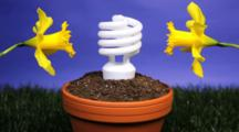 Compact Fluorescent Light Bulb Planted In A Planter With Daffodils